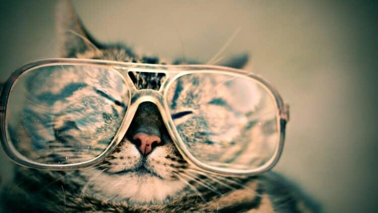 Katt med glasögon