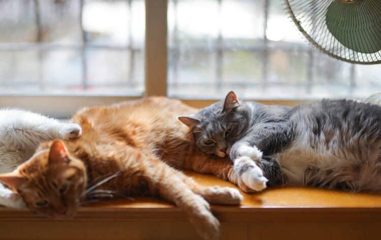 Katter som vilar i fönster