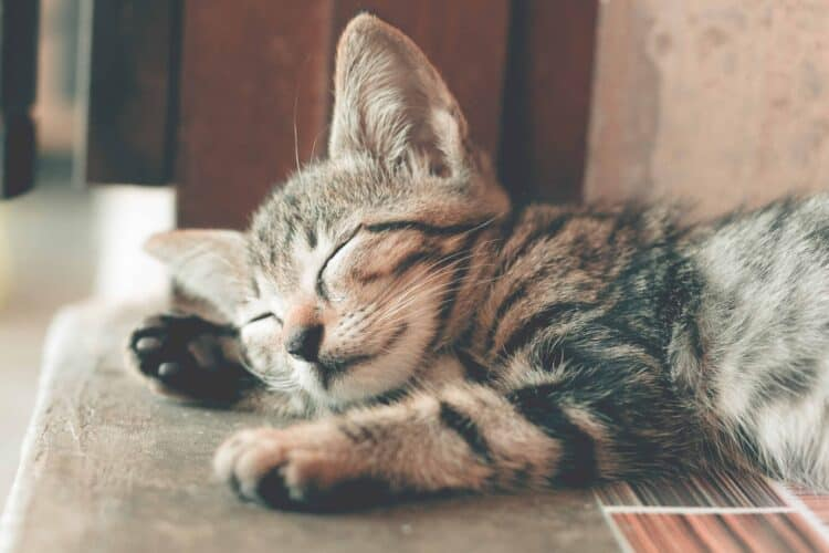 Kattunge sover